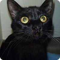 Adopt A Pet :: Cola - Hamburg, NY