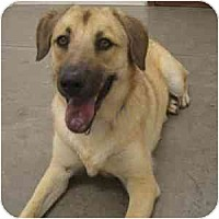 Adopt A Pet :: Murray - Phoenix, AZ
