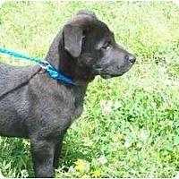 Adopt A Pet :: Whammy - Wakefield, RI