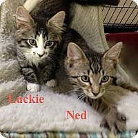 Adopt A Pet :: LUCKIE & NED - 2013 - Hamilton, NJ