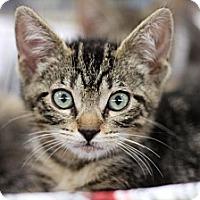 Adopt A Pet :: Gia - Sacramento, CA