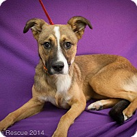 Adopt A Pet :: Frenchy - Broomfield, CO