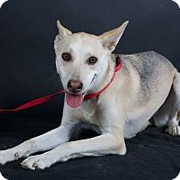 Adopt A Pet :: Gypsy - Nuevo, CA