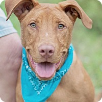 Adopt A Pet :: Rudy - Houston, TX