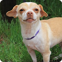 Adopt A Pet :: Kyla - Fountain, CO