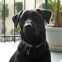 Adopt A Pet :: Zeus - Burbank, CA