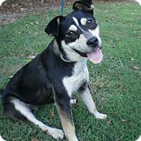 Husky Mix Dog for adoption in Halethorpe, Maryland - Ellie Mae
