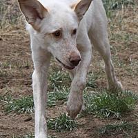 Adopt A Pet :: Freckles - Colorado Springs, CO