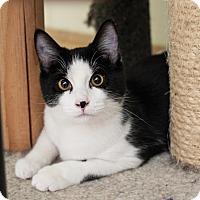 Adopt A Pet :: Jupiter - Shelton, WA
