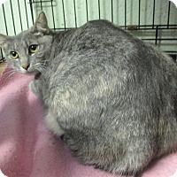 Adopt A Pet :: Azalea - Reeds Spring, MO