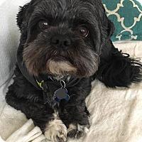 Adopt A Pet :: Prynce - Newport, KY