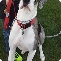 Adopt A Pet :: Gunner - Vacaville, CA