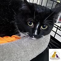 Adopt A Pet :: Mi Mi - Eighty Four, PA