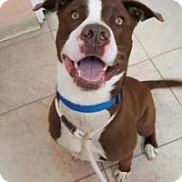 Adopt A Pet :: Whitman - Reisterstown, MD