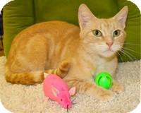 Domestic Shorthair Cat for adoption in Atlanta, Georgia - Cate