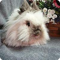 Adopt A Pet :: Kewpie - Newport, DE
