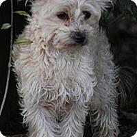 Adopt A Pet :: Razz - Providence, RI