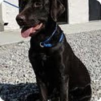 Adopt A Pet :: Destiny - Lewisville, IN