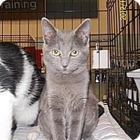 Adopt A Pet :: Lilia - Riverside, RI