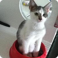 Adopt A Pet :: Toopy - Hamilton, ON