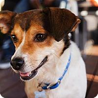 Adopt A Pet :: Chester - Burbank, CA