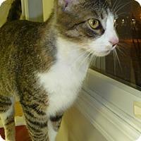 Adopt A Pet :: Eady - Hamburg, NY