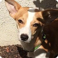 Adopt A Pet :: Rio - Valencia, CA