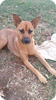 Shepherd (Unknown Type) Mix Dog for adoption in Cincinnati, Ohio - Gertie