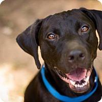 Adopt A Pet :: Lucky - Chesterfield, VA