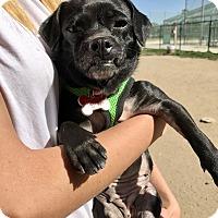 Adopt A Pet :: Clover - Los Angeles, CA