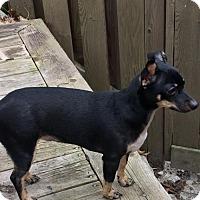 Adopt A Pet :: Tina - Toronto, ON