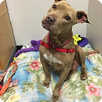 Adopt A Pet :: Nico - San Luis Obispo, CA