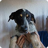 Adopt A Pet :: Gage - Oviedo, FL