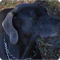 Adopt A Pet :: Lucas - Eustis, FL