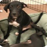 Adopt A Pet :: Guido - Phoenix, AZ