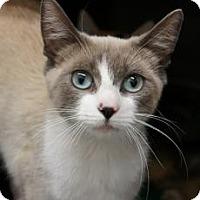Adopt A Pet :: Willa - lake elsinore, CA