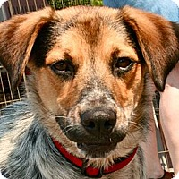 Adopt A Pet :: Speck - Hastings, NY