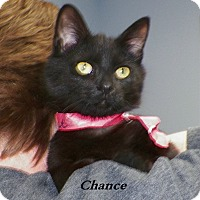 Adopt A Pet :: Chance - Dover, OH