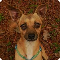 Adopt A Pet :: Beetle Bailey - Ormond Beach, FL