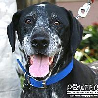 Adopt A Pet :: Vince - Gardena, CA