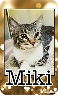 Domestic Shorthair Kitten for adoption in Edwards AFB, California - Miki