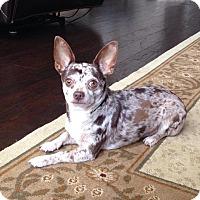 Adopt A Pet :: Cooper - Arden, NC