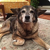 Adopt A Pet :: ELLIE (hospice) - Brunswick, ME