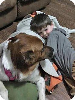 German Shepherd Dog/Spaniel (Unknown Type) Mix Dog for adoption in Allentown, Pennsylvania - Sweet Bella Boo