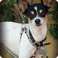 Adopt A Pet :: Spider - Anaheim Hills, CA