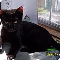 Adopt A Pet :: Max - Summerville, SC