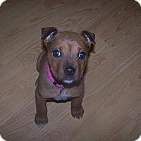 Adopt A Pet :: Pixie - Chewelah, WA