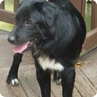 Adopt A Pet :: DEWEY - Raleigh, NC