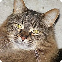 Adopt A Pet :: Charo - Rigaud, QC