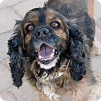 Adopt A Pet :: Leroy Brown - Scottsdale, AZ